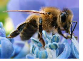 Οι μέλισσες πιο γρήγορες από τους υπολογιστές!